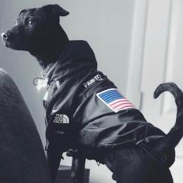 Pies zimowe ubrania wiatroszczelna kurtka dla psa moda odzież dla zwierząt dla średnich duże psy Labrador odblaskowe ubrania dla