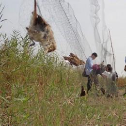 WCIC przeciw ptakom Catcher siatki staw netto sieci rybackie pułapki uprawy owoce drzewo warzywa kwiat siatka ogrodowa chroń zwa