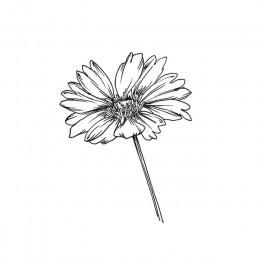Przezroczysty znaczek szkic kwiat nowy 2019 wyczyść znaczki gumowa silikonowa pieczątka dla DIY Scrapbooking tworzenie kartek oz