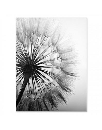 Mniszek pospolity kwiat na płótnie malarstwo nowoczesne czarny biały Art zdjęcia do dekoracji wnętrz salonu abstrakcyjne ścianie
